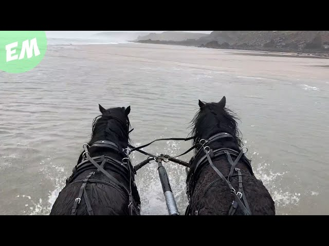 The Black Stallions head to the seaside for the first time!