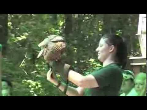 Carolina Raptor Center in Huntersville