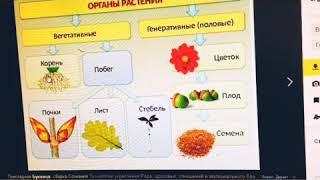 Подготовка к ОГЭ по биологии! Вегетативные органы.Корень.Урок 1