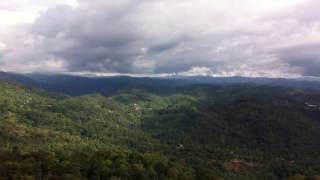 Tea plantations of Munnar, Morning view