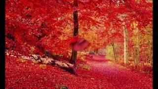 疲れがなくなる音楽 癒し世界  【 Feel the Red】 RELAX music 癒し ヒーリング thumbnail