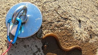 Caught an EEL Magnet Fishing with a Crazy Dangerous Magnet!
