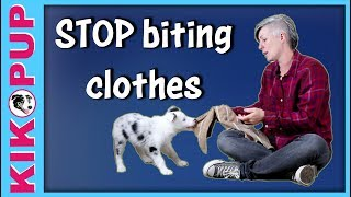STOP puppy BITING clothes