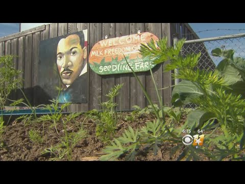 New Effort In South Dallas To Sprout More Backyard Gardens
