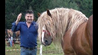 Concurs cu cai de frumusete - Calatele Padure, Cluj - 2018