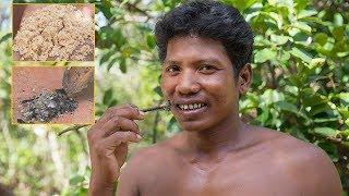 Primitive Technology: Toothpaste  Use Sand/Ash