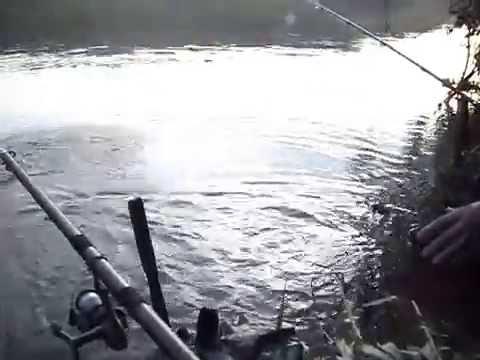 pescaria de tilapia com capim.wmv