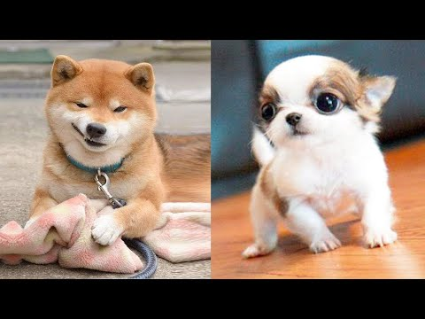 Funniest Animals – Best Of The 2021 Funny Animal Videos #12
