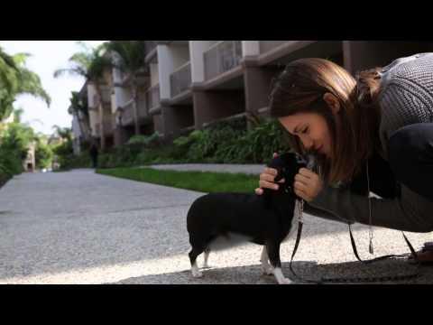 Meet My Shelter Pet: Torrey DeVitto