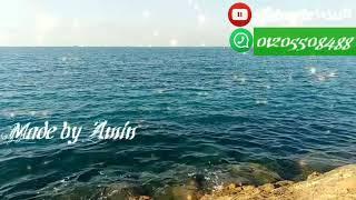 ريحه مطر بالكلمات عمر شعبان & زياد جمال