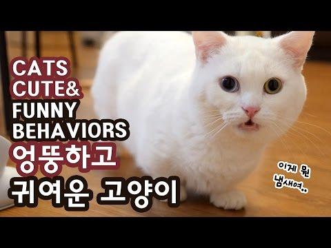 고양이 엉뚱하고 귀여운 순간들 CUTE & FUNNY CAT BEHAVIORS
