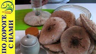 готовим ЗОНТИКИ ГРИБЫ которые собрали в лесу. Как приготовить грибы Зонтики
