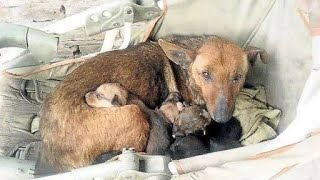 Street dog guards abandoned baby – shows that dogs have a heart of gold