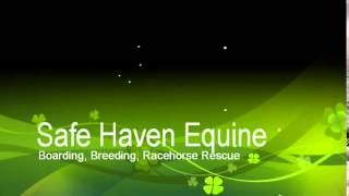 OTTB Mare For Sale at Safe Haven Equine in Bucks County PA