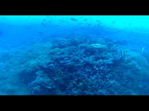 Sea Turtle and Super Strong Currents at Nusa Penida, Bali, Indonesia