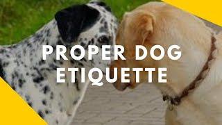 Proper Dog Etiquette - On Leash Greetings