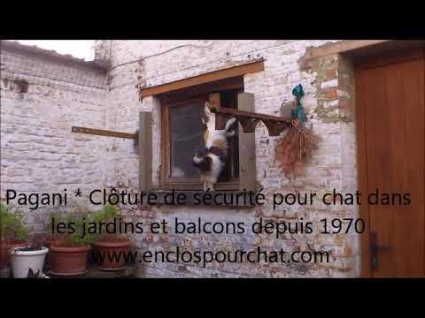 protection pour chat en France Belgique suisse et luxembourg