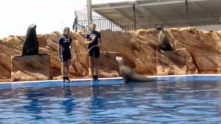 Marineland Mallorca 2012
