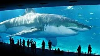 REAL MEGALODON SHARK PROOF/EVIDENCE 2015 (WORLDS BIGGEST/LARGEST SHARK)