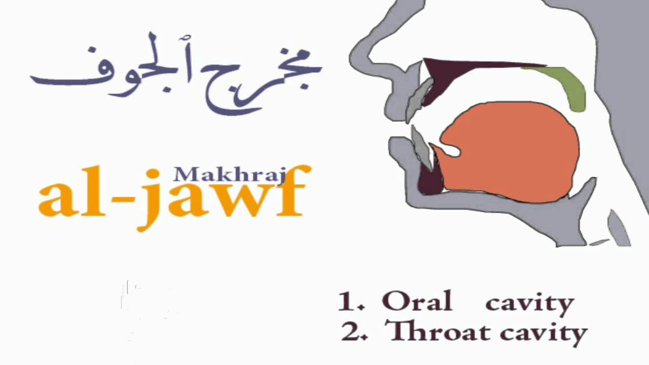 Tajweed lesson 2: Introduction to the oral cavity makhraj
