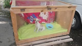 Рынок собак. Староконный рынок. Одесса. Сегодня. Животные. Птичий рынок. Самый большой рынок Украины