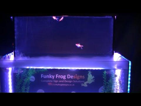 How to create a upside down fish tank aquarium doovi for Inverted fish tank