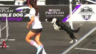 Purina Pro Plan Incredible Dog Challenge | USS Midway Museum