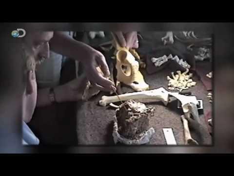 Discovering Ardi (Ardipithecus Ramidus)