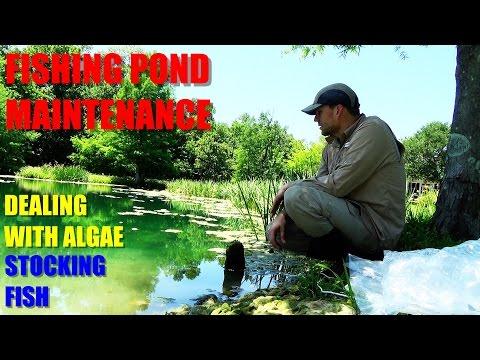 Fishing Pond Maintenance - Pond Algae Control And Fish Stocking