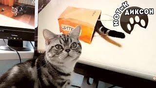 🐾😺 Котик Диксон и компьютер.Смешное видео про кошек.