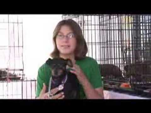 Per Foundation Dog Adoptions And Dog Rescue Los Angeles