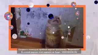 Рыжие котята поют песенку.Red kittens sing a song.