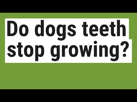 Do Dogs Teeth Stop Growing?