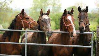 Pferdestärken - Der Pferdehändler vom Bingumer Deich Doku HD