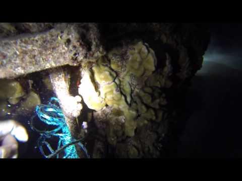 Night Dive Electric Beach Hawaii