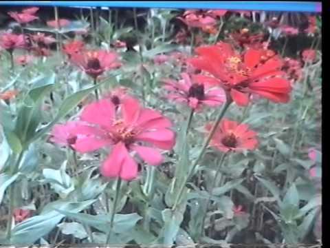 Selamat Tinggal Bunga Ku - by A.Ramlie.