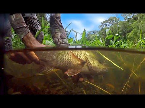 Epic Jungle Jack & Barramundi & Tarpon Fishing Andy's Fish Video EP.327