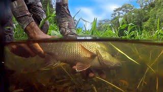 Over night Jungle Mangrove Jack  Barramundi  Tarpon Fishing Explore EP.327