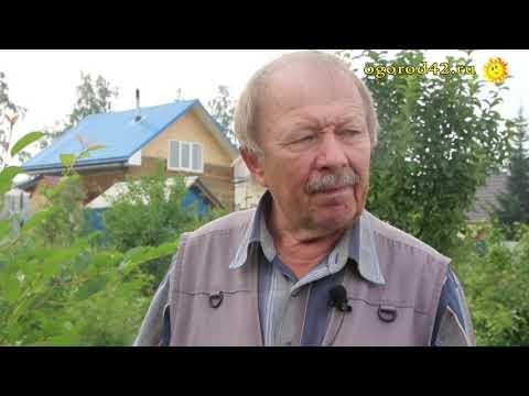 Отчего дюки и черешню в Сибири не стоит выращивать