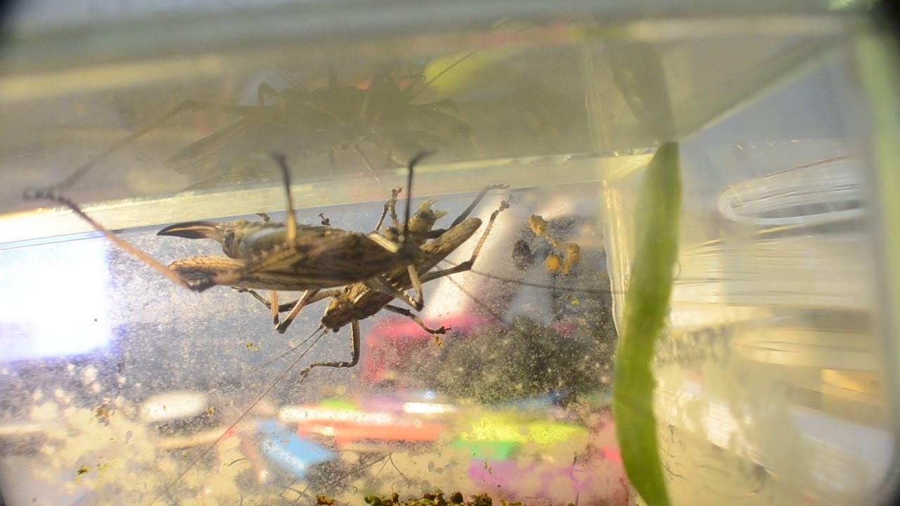 картинки террариум с насекомыми любых