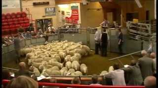 Dingwall Mart 11 Sept 2014 (Heatherlea NCH379)