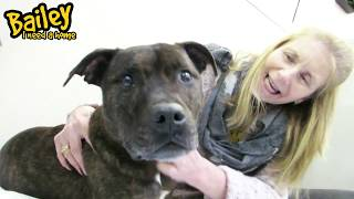 Dogs Trust Manchester - Bailey