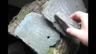 Urbania Sound Objects