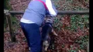 (Dog Attack) Qeni i Mujes ne Gjermani ushtrime profesionale