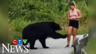 Caught on camera: Bear takes swipe at hiker in B.C.