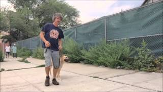 Dog Training Tip For Heel Command