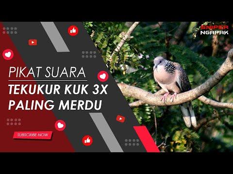MASTER SUARA TEKUKUR KUK 3X DURASI 1 JAM