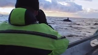 Diving with killer whales - Wildlife Specials: Killer Whale - BBC