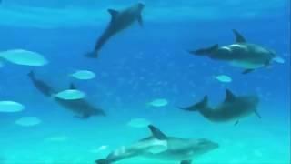 Все дельфины в ураган -  Band ODESSA