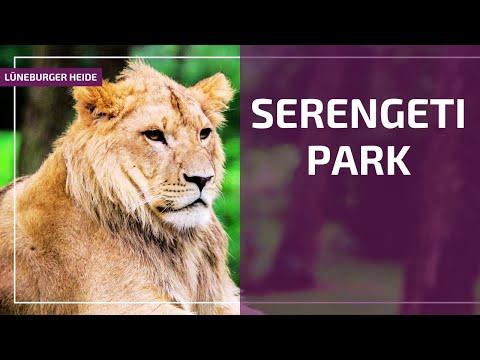 Tierisch Serengeti Park Hodenhagen L 252 Neburger Heide Tv